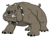 Angry bulldog Stock Image