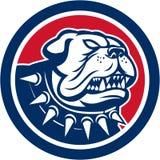 Angry Bulldog Dog Mongrel Head Mascot Stock Photography