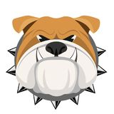 Angry bulldog face in metal collar vector realistic illustration. Head of grown up canin medium-sized breed with wrinkled face and evil tooth smile Royalty Free Stock Photography