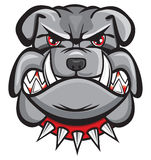 Angry bulldog head. On white Royalty Free Stock Images