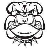Angry bulldog head black and white Royalty Free Stock Photo