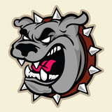 Angry Bulldog Head Stock Image