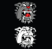 Angry bulldog Royalty Free Stock Images