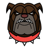Angry Bulldog. Is in red spiked collar Royalty Free Stock Photography