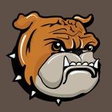Angry bulldog. Vector illustration, Flat and minimal design Stock Image