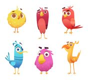 Angry cartoon birds. Chicken eagles canary animal faces and feathers vector game characters of colored birds. Illustration of color bird animal royalty free illustration