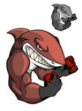 Angry cartoon boxing shark Stock Photography