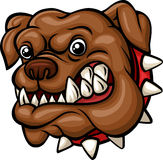 Angry cartoon bulldog head mascot. Illustration of Angry cartoon bulldog head mascot on white background Royalty Free Stock Photo