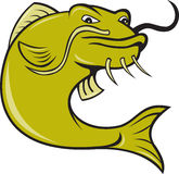Angry Cartoon Catfish Fish Royalty Free Stock Image