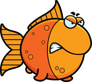 Angry Cartoon Goldfish Stock Photos