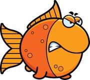 Angry Cartoon Goldfish Stock Photos