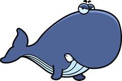 Angry Cartoon Whale Stock Photos