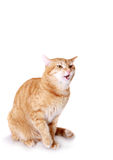 Angry cat Stock Photo