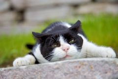 Angry cat. On stone tile stock photos