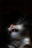 Angry cat. In the dark lighted with flash supposed to be a horror image stock images