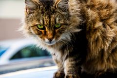 Angry cat. An angry cat and old cat who lives at same street many years at istanbul, Fatih Stock Photography