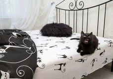 Angry cat on the bed Royalty Free Stock Photography