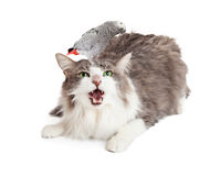 Angry Cat With Bird on Head. An angry cat with a brave and curious bird on his head royalty free stock image