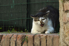 Angry cat. On brick wall with green network royalty free stock photography