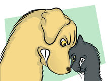 Angry Cat and Dog. Dog and Cat Nose to Nose Cartoon Stock Photography
