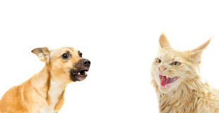 Angry cat and dog. On a white background stock images