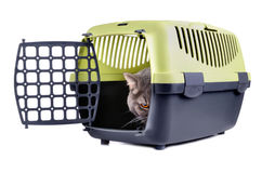 Angry cat. Angry gray cat looking from plastic cage on a white background stock photos