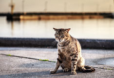 Angry Cat Royalty Free Stock Image
