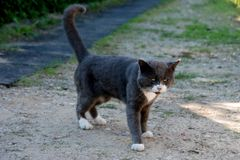Angry cat looking at the dog. Wild cat in the yard, angry looking Royalty Free Stock Images