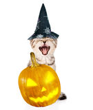 Angry cat with pumpkin and hat for halloween. isolated on white Stock Photography