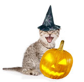 Angry cat  with pumpkin and hat for halloween.  on white Royalty Free Stock Image