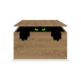 Angry cat in a wooden box Stock Photos