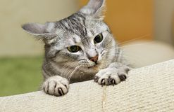 Angry cat stock photos