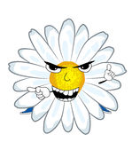 Angry chamomile flower cartoon Stock Photos