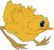 Angry chiken -  illustration. Vector illustration of a little yellow angry chicken Stock Photos