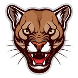 Angry cougar head. Vector illustration of angry cougar face. Can be used as mascot Royalty Free Stock Photography