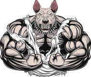 Angry dog bodybuilder Royalty Free Stock Photography