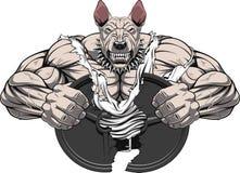 Angry dog bodybuilder Stock Image