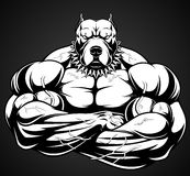 Angry dog bodybuilder. Vector illustration of a strong  pitbull with big biceps, bodybuilder Royalty Free Stock Photography