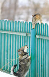 Angry dog chased the cat on a high wooden fence in the village. Dog chased the cat on a high wooden fence in the village royalty free stock photography
