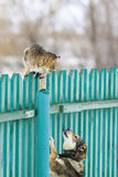 Angry dog chased the cat on a high wooden fence in the village. Dog chased the cat on a high wooden fence in the village stock photos
