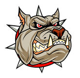 Angry dog head. Head of cartoon angry dog on the white background Royalty Free Stock Image
