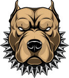 Angry dog head. Vector illustration of a head of a spiteful pit bull, on a white background Stock Photo
