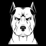Angry dog stafford. Royalty Free Stock Photo