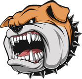 Angry dog. Vector illustration Angry bulldog mascot head, on a white background Royalty Free Stock Photos