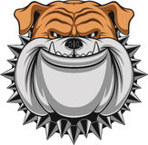 Angry dog. Vector illustration Angry bulldog mascot head, on a white background Royalty Free Stock Photo