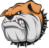 Angry dog. Vector illustration Angry bulldog mascot head, on a white background Royalty Free Stock Image