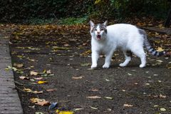 Angry domestic pet cat in an urban park