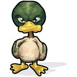 Angry Duck with clipping path Royalty Free Stock Images