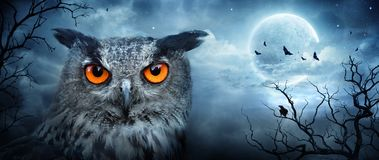 Angry Eagle Owl At Moonlight In The Spooky Forest royalty free stock image