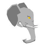 Angry elephant. head of  big aggressive animal with grin. Wild b Stock Photos